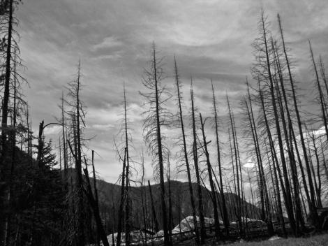 montana_fire