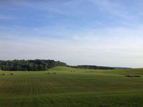hayfield1