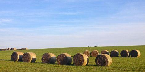 hayfield2